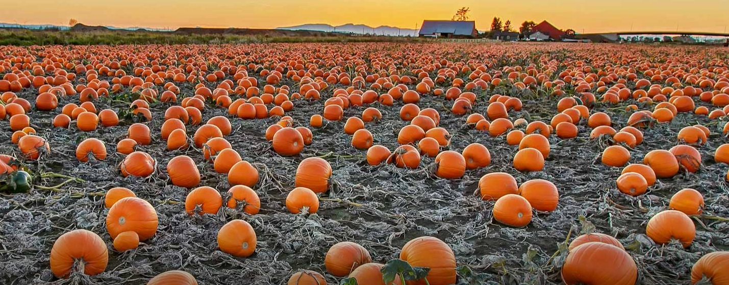 Which state grows the most pumpkins?